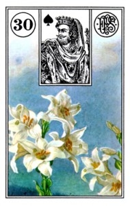 lenormand 30 Lily