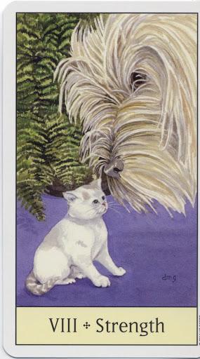 Lá VIII. Strength - Cat's Eye Tarot 2