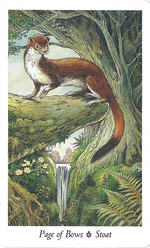 Lá Page of Bows – Wildwood Tarot