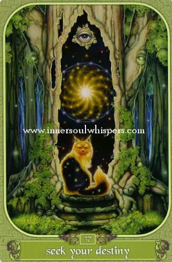 Ý nghĩa lá Seek your destiny trong bộ Messenger Oracle