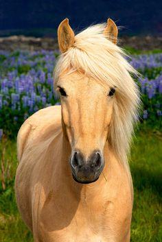 Biểu Tượng Trong Tarot – Ngựa
