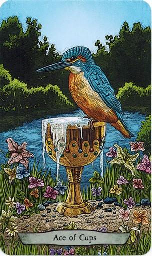 Ý nghĩa lá Ace of Cups trong bộ bài Animal Totem Tarot