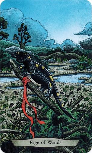 Ý nghĩa lá Page of Wands trong bộ bài Animal Totem Tarot