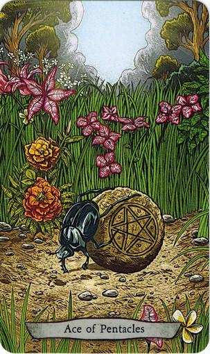 Ý nghĩa lá Ace of Pentacles trong bộ bài Animal Totem Tarot