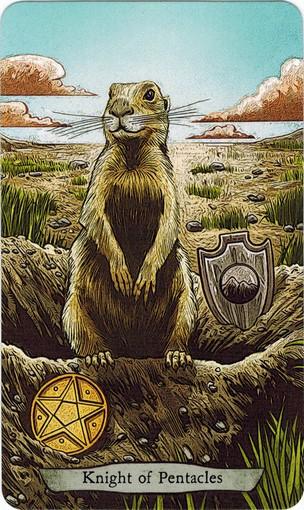 Ý nghĩa lá Knight of Pentacles trong bộ bài Animal Totem Tarot