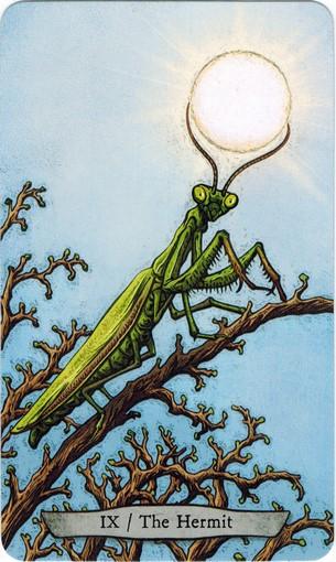 Lá IX. The Hermit – Animal Totem Tarot