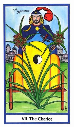 Ý nghĩa lá The Chariot trong bộ bài Herbal Tarot