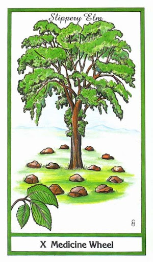 Ý nghĩa lá Medicine Wheel trong bộ bài Herbal Tarot