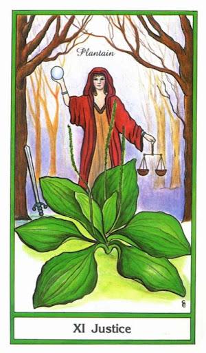 Ý nghĩa lá Justice trong bộ bài Herbal Tarot