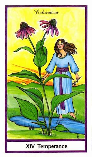 Ý nghĩa lá Temperance trong bộ bài Herbal Tarot