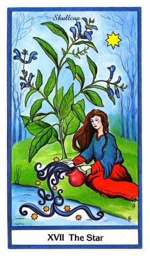 Ý nghĩa lá The Star trong bộ bài Herbal Tarot