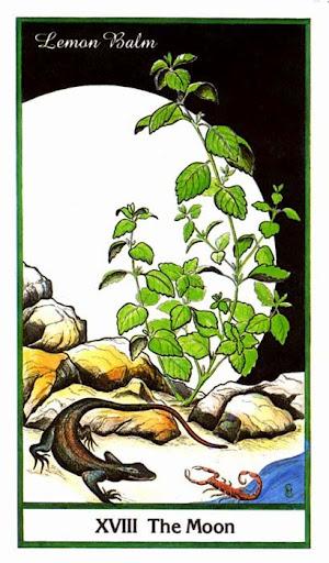 Ý nghĩa lá The Moon trong bộ bài Herbal Tarot