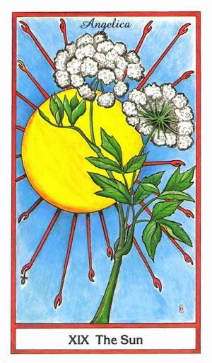Ý nghĩa lá The Sun trong bộ bài Herbal Tarot