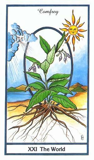 Ý nghĩa lá The World trong bộ bài Herbal Tarot