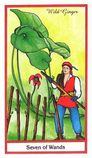 Ý nghĩa lá 7 of Wands trong bộ bài Herbal Tarot
