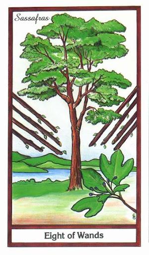 Ý nghĩa lá 8 of Wands trong bộ bài Herbal Tarot