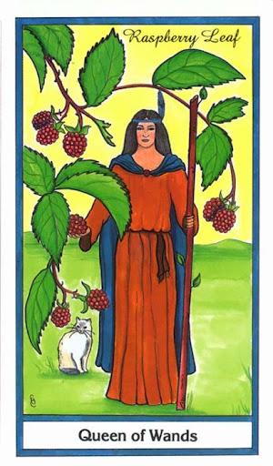 Ý nghĩa lá Queen of Wands trong bộ bài Herbal Tarot