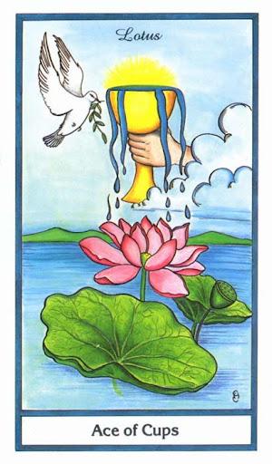 Ý nghĩa lá Ace of Cups trong bộ bài Herbal Tarot