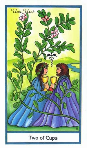 Ý nghĩa lá 2 of Cups trong bộ bài Herbal Tarot