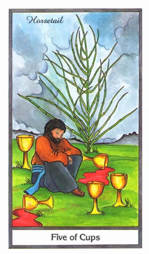 Ý nghĩa lá 5 of Cups trong bộ bài Herbal Tarot