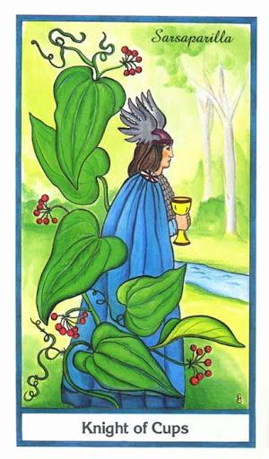 Ý nghĩa lá Knight of Cups trong bộ bài Herbal Tarot