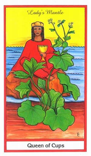 Ý nghĩa lá Queen of Cups trong bộ bài Herbal Tarot