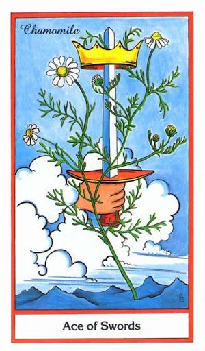 Ý nghĩa lá Ace of Swords trong bộ bài Herbal Tarot