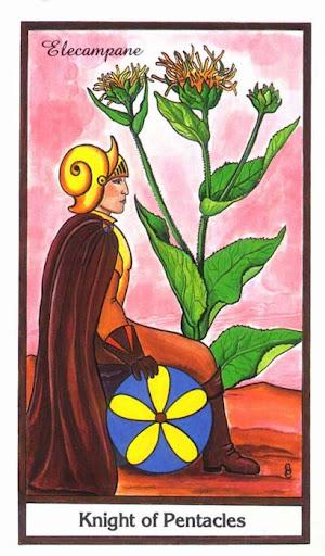 Ý nghĩa lá Knight of Pentacles trong bộ bài Herbal Tarot