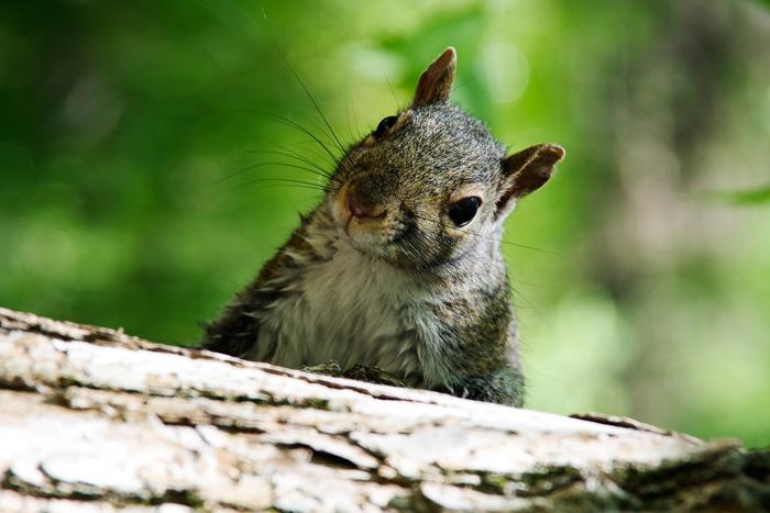 Giải Nghĩa Lá Bài Happy Squirrel Trong Tarot