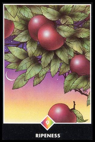 Ý nghĩa lá 9 of Rainbows trong bộ bài Osho Zen Tarot