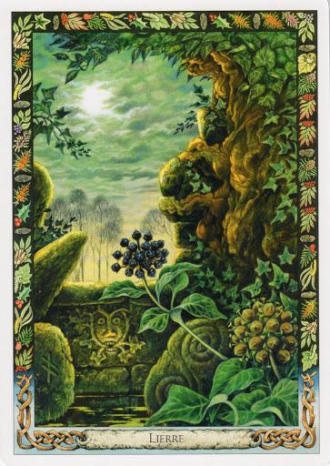 Lá Ivy – Druid Plant Oracle