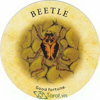 Tea Leaf Fortune Cards - Sách Hướng Dẫn Bói Trà 12