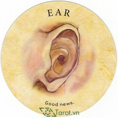 Ý nghĩa lá Ear trong bộ bài Tea Leaf Fortune Cards