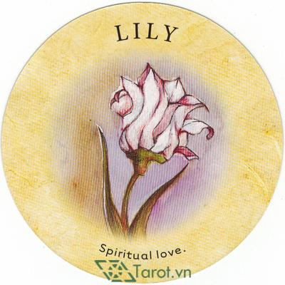 Ý nghĩa lá Lily trong bộ bài Tea Leaf Fortune Cards