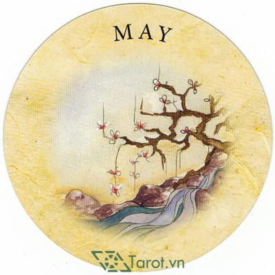 Tea Leaf Fortune Cards - Sách Hướng Dẫn Bói Trà 187