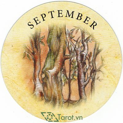 Tea Leaf Fortune Cards - Sách Hướng Dẫn Bói Trà 191
