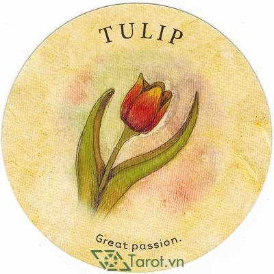 Ý nghĩa lá Tulip trong bộ bài Tea Leaf Fortune Cards