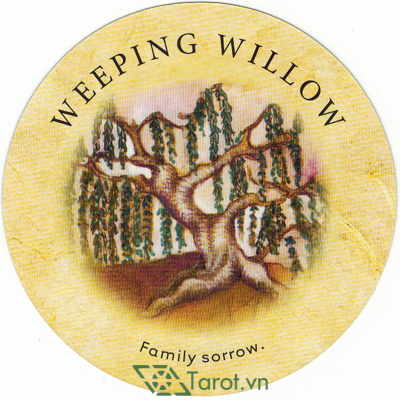 Ý nghĩa lá Weeping Willow trong bộ bài Tea Leaf Fortune Cards