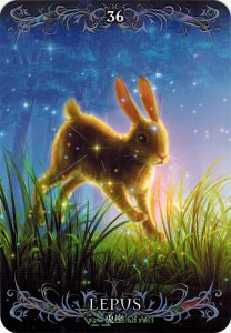 Lá 36. Lepus – Astrology Oracle Cards 1