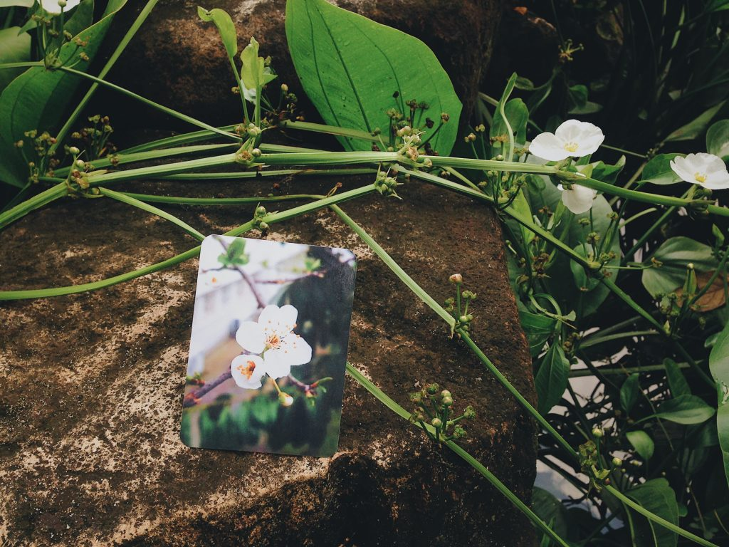 Mối quan hệ độc hại ảnh hưởng rất nhiều đến chúng ta<br /> Ảnh: Nguyễn Hiếy, bộ bài: Speak Of Life Affirmations Cards (Handmade deck)