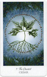 The Herbcrafter's Tarot - Sách Hướng Dẫn 8