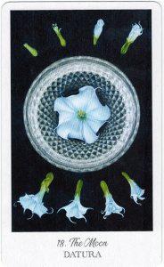 The Herbcrafter's Tarot - Sách Hướng Dẫn 19
