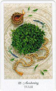 The Herbcrafter's Tarot - Sách Hướng Dẫn 21