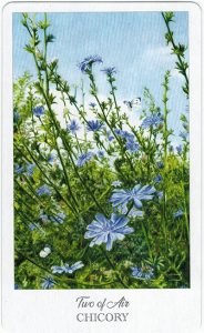 The Herbcrafter's Tarot - Sách Hướng Dẫn 27