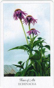 The Herbcrafter's Tarot - Sách Hướng Dẫn 31