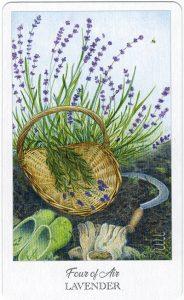 The Herbcrafter's Tarot - Sách Hướng Dẫn 35