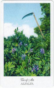 The Herbcrafter's Tarot - Sách Hướng Dẫn 59