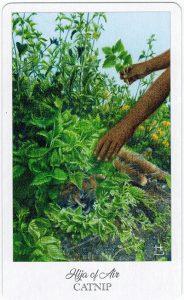 The Herbcrafter's Tarot - Sách Hướng Dẫn 63