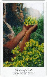 The Herbcrafter's Tarot - Sách Hướng Dẫn 74