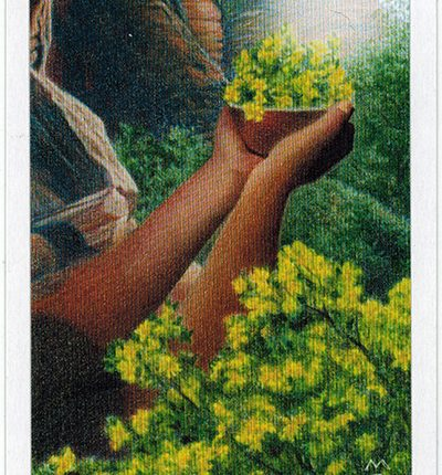 The Herbcrafter's Tarot – Madre Of Earth